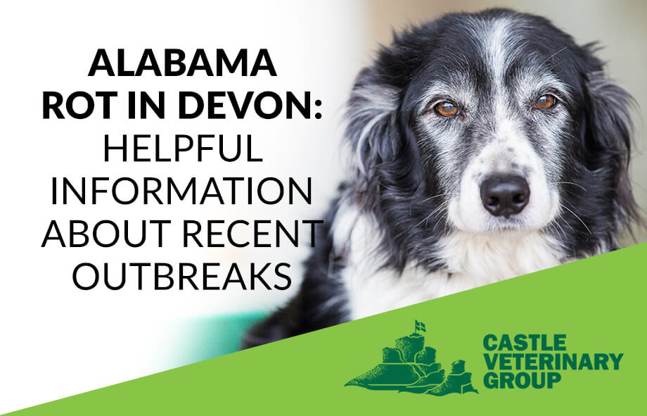 Alabama Rot in Devon: Helpful information about recent outbreaks