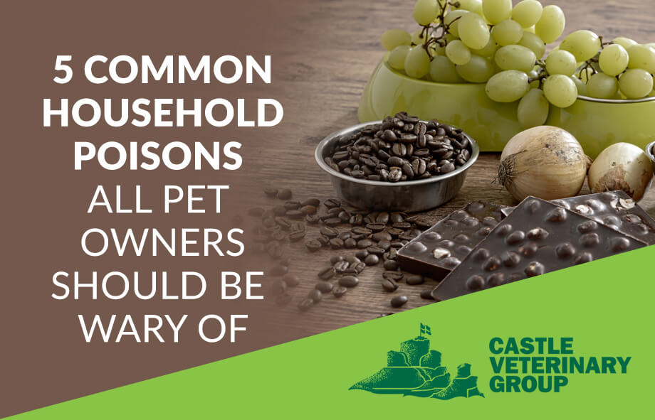 5 common household poisons all pet owners should be wary of