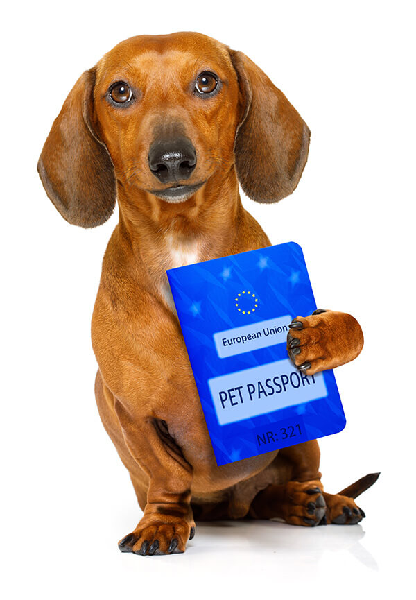 Getting a pet passport - travel advice for happy pets