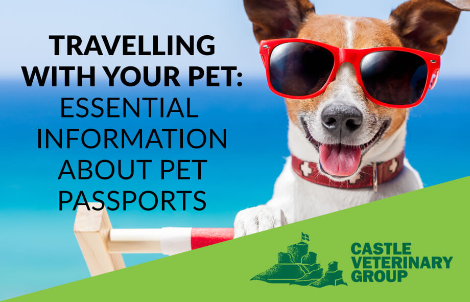 Getting a pet passport – travel advice for happy pets