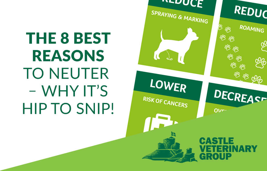 The 8 best reasons to neuter – why it's hip to snip