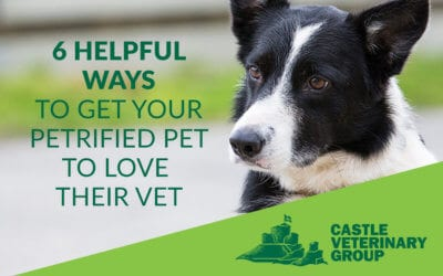 6 helpful ways to get your petrified pet to love their vet