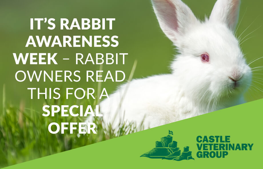 Rabbit Awareness Week 2018 - Castle Vets specials Offers