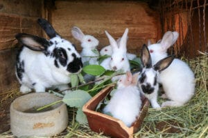 Make an appointment for your Rabbit and receive a FREE goody bag