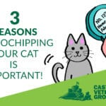 Cat Microchipping - why it's important for you and your cat