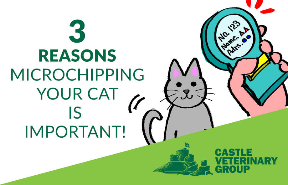 3 reasons microchipping cats is important
