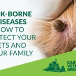 Ticks and Tick borne diseases and your pets