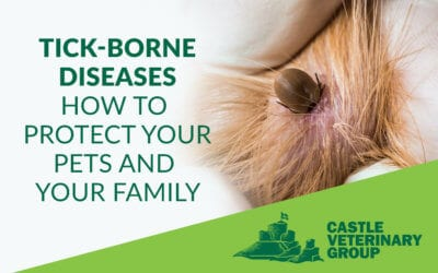 Tick-borne diseases – Protect your pets and your family from ticks