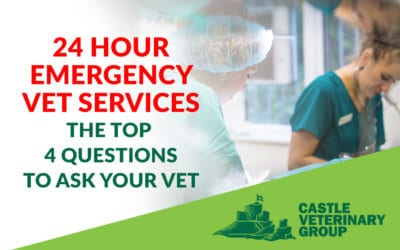 24 hour Emergency Vet Services – The Top 4 Questions To Ask Your Vet