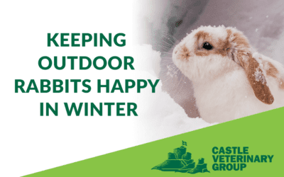 Keeping Outdoor Rabbits Happy in Winter